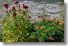 europe, flowers, greece, horizontal, oranges, red, tinos, photograph