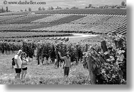 black and white, clothes, emotions, europe, from, groups, hats, horizontal, hungary, smiles, vineyards, waving, photograph