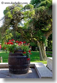 barrels, europe, geraniums, grof degenfeld castle hotel, hungary, vertical, photograph