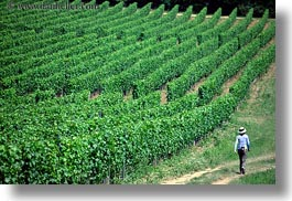 europe, hikers, hiking, horizontal, hungary, people, tokaj hills, vinyards, photograph