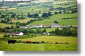 connaught, connemara, cows, europe, horizontal, ireland, irish, landscapes, mayo county, pasture, western ireland, photograph