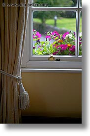 connaught, connemara, curtains, europe, flowers, ireland, irish, mayo county, vertical, western ireland, photograph