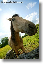 connaught, connemara, europe, horses, ireland, irish, mayo county, nose, vertical, western ireland, photograph