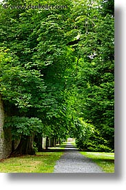 eastern ireland, europe, ireland, irish, kildare, leinster, paths, trees, vertical, photograph