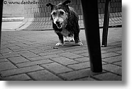 black and white, cork, cork county, dogs, europe, horizontal, ireland, irish, munster, youghal, photograph