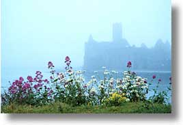 cork, cork county, europe, fog, horizontal, ireland, irish, munster, wildflowers, photograph