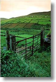 cork county, dingle, dingle penninsula, europe, farmgate, ireland, munster, vertical, photograph