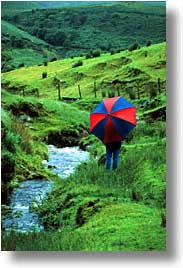 cork county, dingle, dingle penninsula, europe, ireland, munster, umbrellas, vertical, photograph