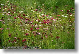 athlone, county shannon, dublin, europe, horizontal, ireland, irish, shannon, shannon river, wildflowers, photograph