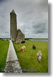 clonmacnois, county shannon, europe, ireland, irish, round, shannon, shannon river, towers, vertical, photograph