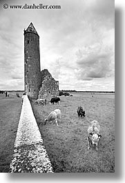 black and white, clonmacnois, county shannon, europe, ireland, round, shannon, shannon river, towers, vertical, photograph