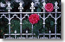 county shannon, europe, fences, horizontal, ireland, irish, irons, lough derg, roses, shannon, shannon river, photograph