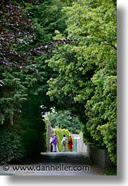 county shannon, europe, ireland, irish, lough derg, shannon, shannon river, trees, tunnel, vertical, photograph