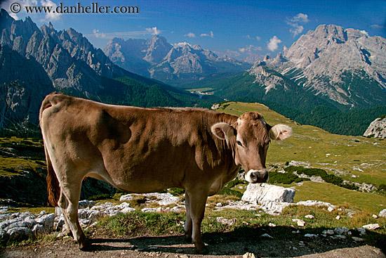 Italy Animals