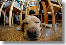 alto adige, animals, dogs, dolomites, europe, fisheye lens, floors, horizontal, italy, photograph