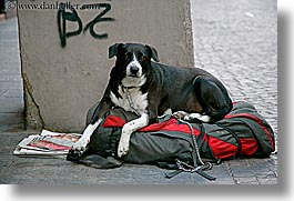 bolzano, dogs, dolomites, europe, homeless, horizontal, italy, photograph