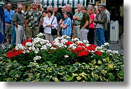 bolzano, dolomites, europe, flowers, horizontal, italy, people, photograph