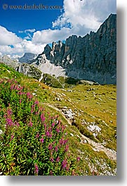 alto adige, civetta, dolomites, europe, flowers, italy, mountains, vertical, photograph