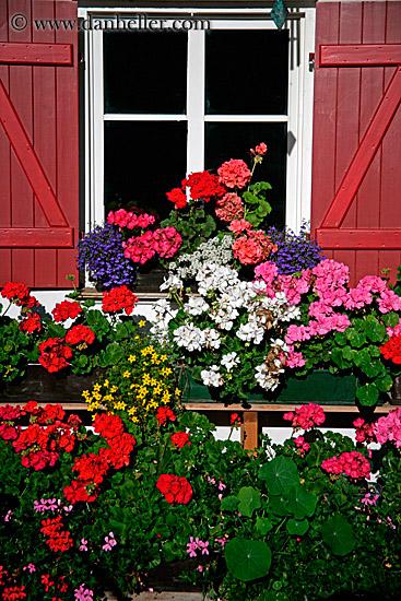 Prozori koji govore - Page 3 Window-flowers-01-big