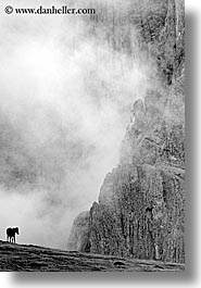 alto adige, black and white, dolomites, europe, fog, horses, italy, rasciesa, rasciesa massif, vertical, photograph