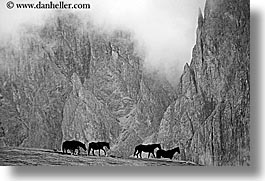 alto adige, black and white, dolomites, europe, fog, horizontal, horses, italy, rasciesa, rasciesa massif, photograph