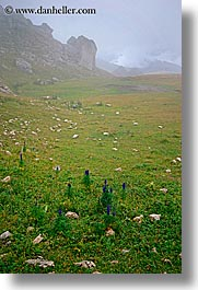 alto adige, dolomites, europe, italy, orsolina, val orsolina, valley, vertical, photograph