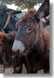 alberobello, babies, donkeys, europe, italy, mule farm, puglia, vertical, photograph