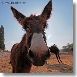 alberobello, big, donkeys, europe, italy, mule farm, nose, puglia, square format, photograph