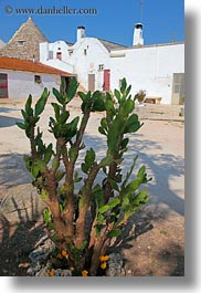 alberobello, cactus, europe, houses, italy, plants, puglia, vertical, photograph