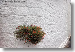 alberobello, europe, flowers, horizontal, italy, oranges, plants, puglia, photograph