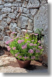 alberobello, europe, flowers, italy, pink, plants, pots, puglia, vertical, photograph