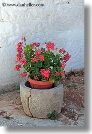 alberobello, europe, geraniums, italy, pink, plants, pots, puglia, vertical, photograph