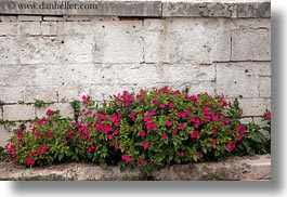 alberobello, europe, flowers, horizontal, italy, plants, puglia, purple, photograph