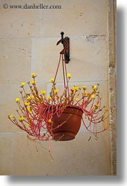europe, hangings, italy, lecce, plants, puglia, vertical, photograph