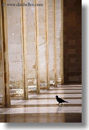between, europe, italy, lecce, pigeons, pillars, puglia, vertical, photograph