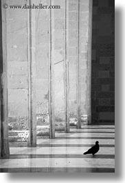 between, black and white, europe, italy, lecce, pigeons, pillars, puglia, vertical, photograph