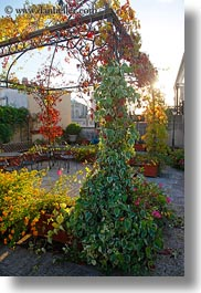 europe, flowers, gazeebo, italy, laden, lecce, patria palace hotel, puglia, vertical, photograph