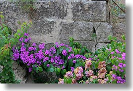 bougainvilleas, europe, flowers, horizontal, italy, matera, nature, plants, puglia, purple, stones, walls, photograph