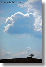 clouds, europe, hills, italy, matera, puglia, scenics, trees, vertical, photograph