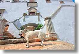 dogs, europe, fronts, horizontal, houses, italy, masseria murgia albanese, noci, puglia, step, photograph