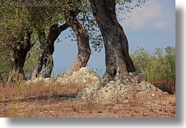 europe, horizontal, italy, olive trees, olives, otranto, puglia, trees, photograph