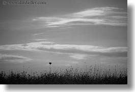black and white, europe, horizontal, italy, puglia, seaside, silhouettes, weeds, photograph