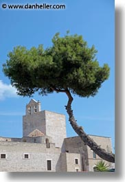 convent, europe, italy, puglia, trani, trees, vertical, photograph
