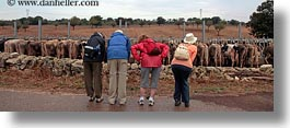 animals, butts, cows, emotions, europe, groups, horizontal, humor, italy, panoramic, puglia, rows, tourists, photograph
