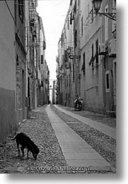 alghero, black and white, dogs, europe, italy, sardinia, streets, vertical, photograph