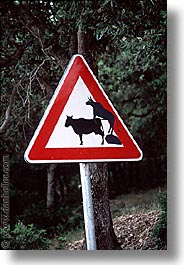 cows, crossing, europe, italy, sardinia, scenics, signs, vertical, photograph