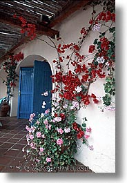 europe, flowery, italy, sardinia, su gologone, vertical, walls, photograph