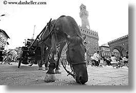 black and white, europe, florence, horizontal, horses, italy, squares, tuscany, uffizi, photograph