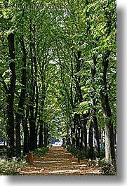 europe, florence, italy, lined, paths, trees, tuscany, vertical, photograph