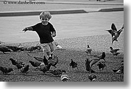 birds, black and white, boys, childrens, europe, florence, horizontal, italy, jacks, people, pigeons, running, toddlers, tuscany, photograph